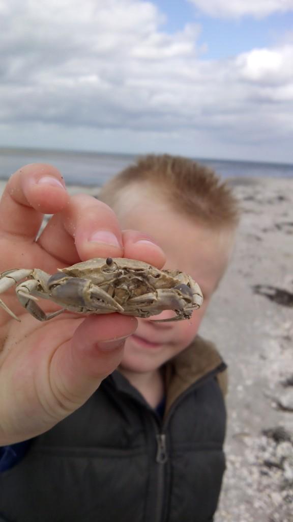 thija met krab